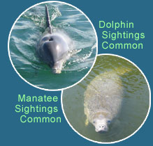 Dolphins & Manateed Sightings Common